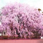 春の東京婚活パーティー一挙紹介🌸