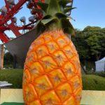 巨大なパイナップル!!台湾に行こう!